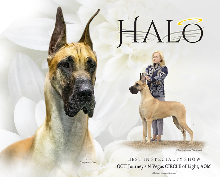 """Feature – BISS GCH Journey's N Vegas Circle of Light, AOM """"Halo"""""""