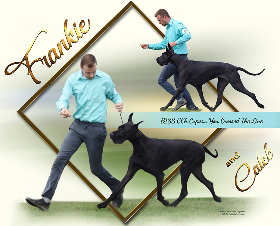 "July Feature – BISS GCH Cupar's You Crossed The Line ""Frankie"""