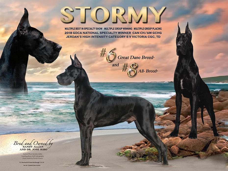 """Feature – MBISS Can CH Am GCHG Jerdan's High Intensity Category 5 V Victoria CGC TD """"Stormy"""""""