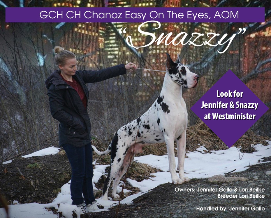 """Feature – GCH Chanoz Easy On The Eyes, AOM """"Snazzy"""""""