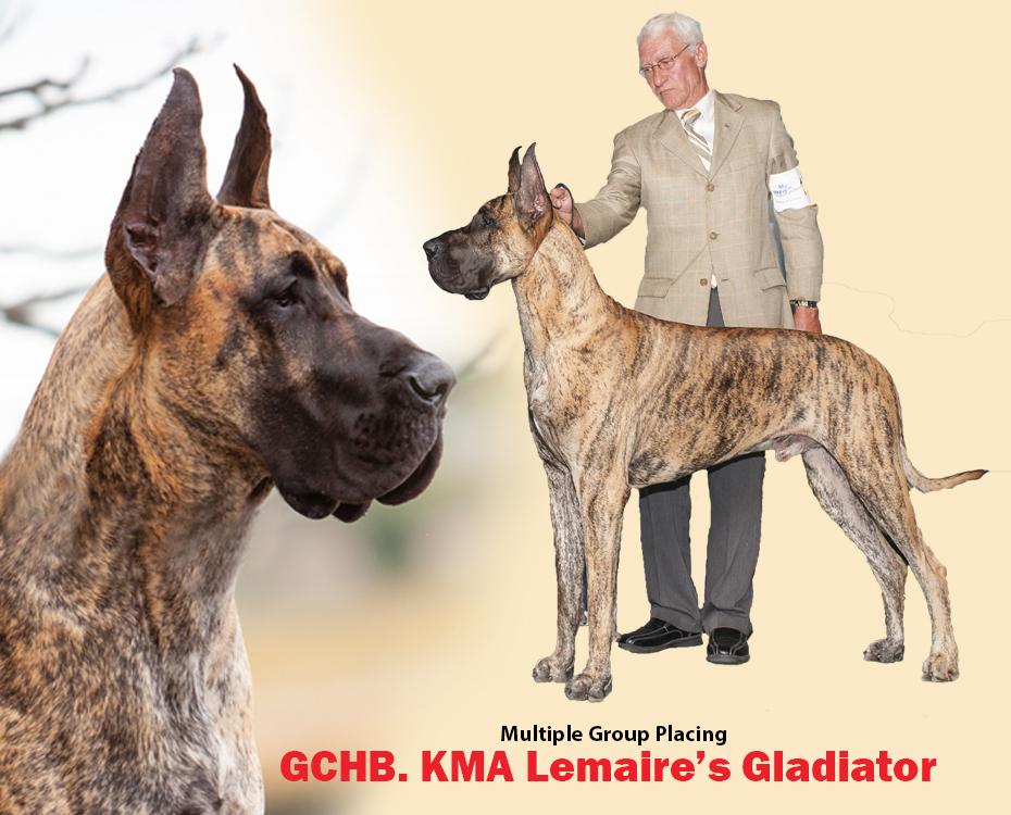"GCHB KMA Lemaire's Gladiator ""Louie"""