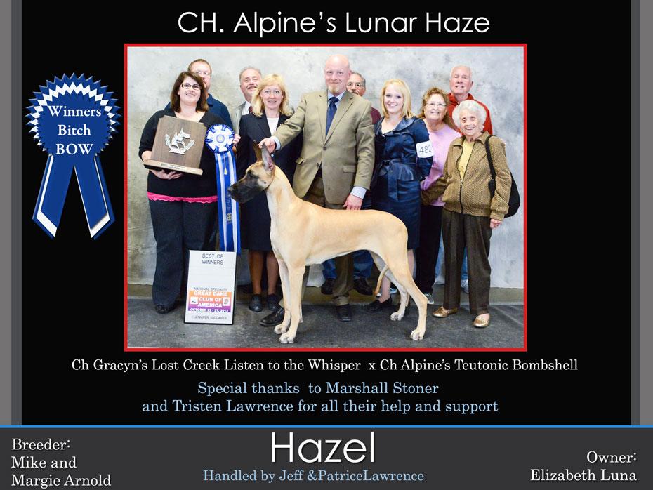 Hazel-winners-bitch-bow