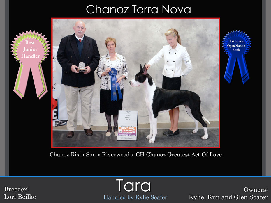 best-junior-handlor-1st-open-harl-tara-