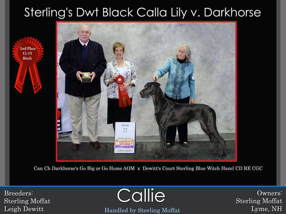 callie-2nd-12-15-bitch