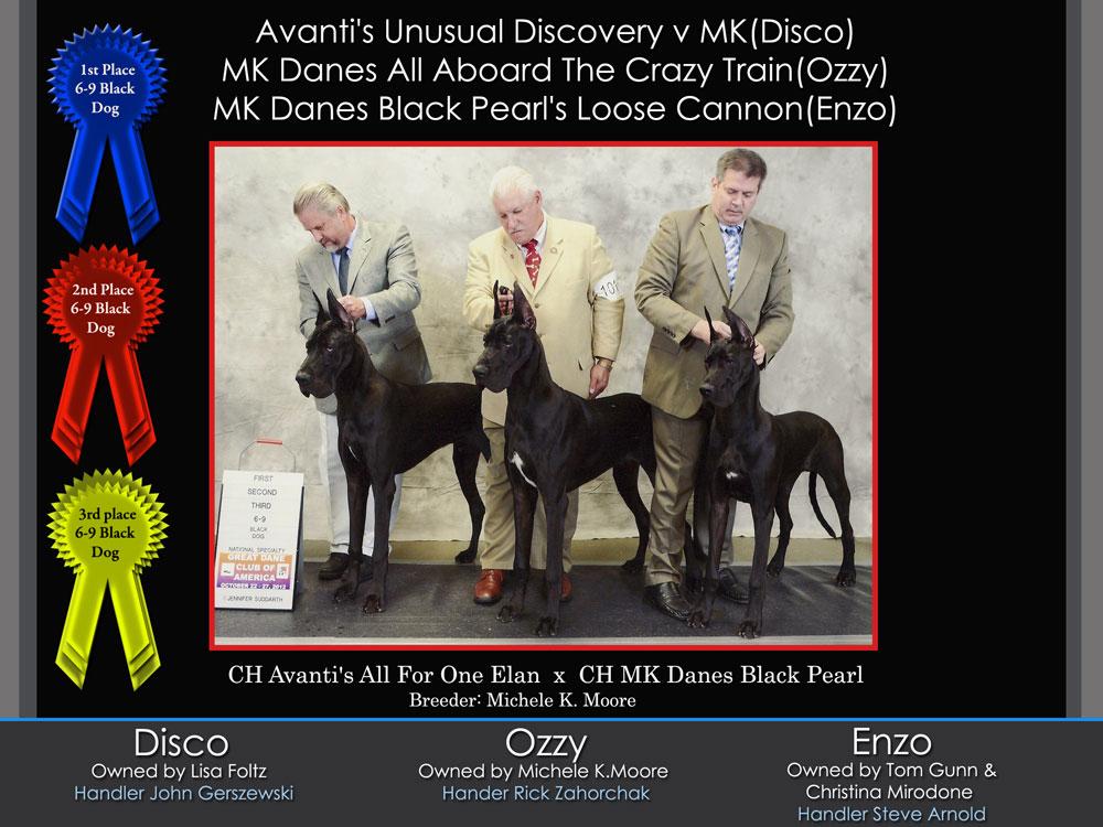 disco-ozzy-enzo-123-6-9-black-dog