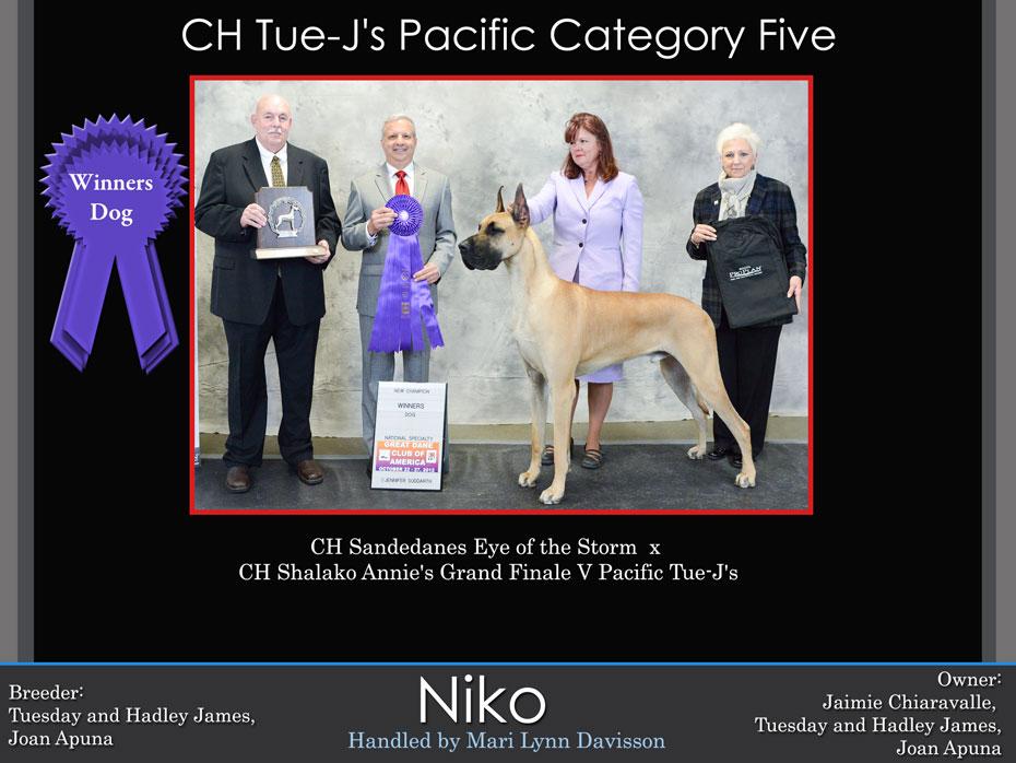 niko-winners-dog