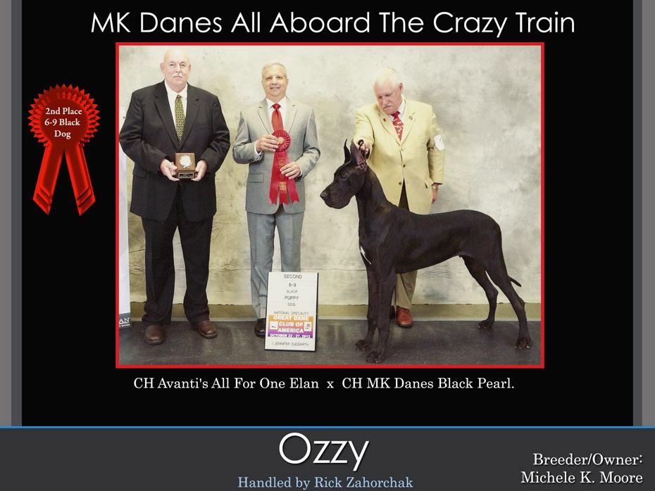 ozzy-2nd-6-9-dog