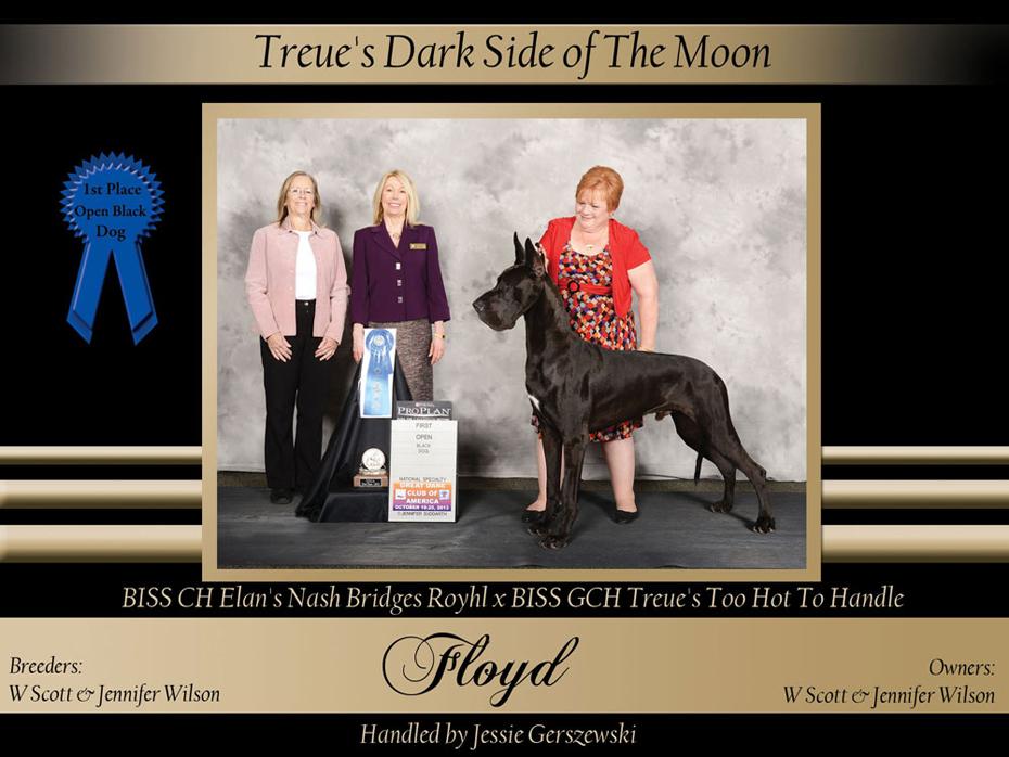 1st-open-black--dog-Treue's-Dark-Side-of-The-Moon