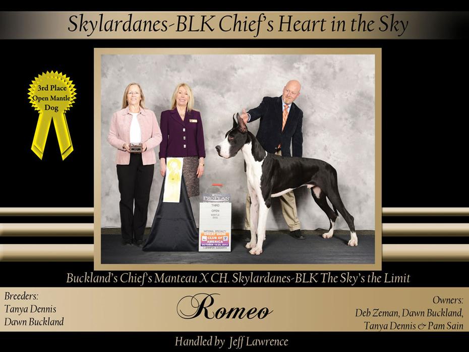 3rd-open-mantel--dog-Skylardanes-BLK-Chiefs-Heart-in-the-Sky