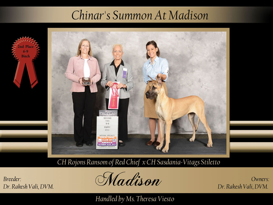 6-9-2nd-puppy-bitch-ChINAR'S-SUMMON-AT-MADISON
