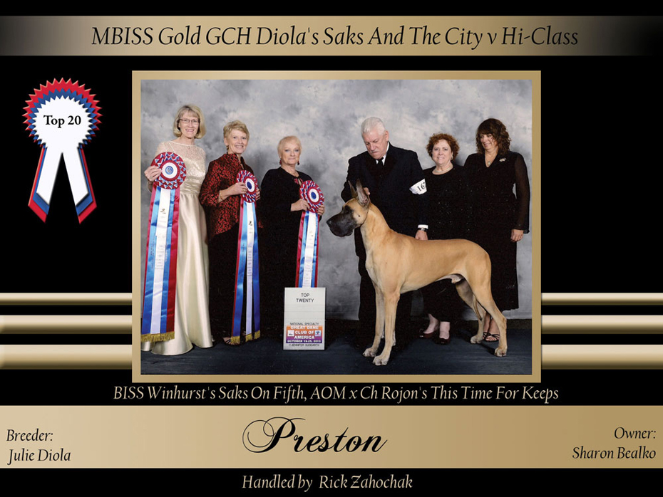 Top-20-MBISS-Gold-GCH-Diola's-Saks-And-The-City-v-Hi-Class