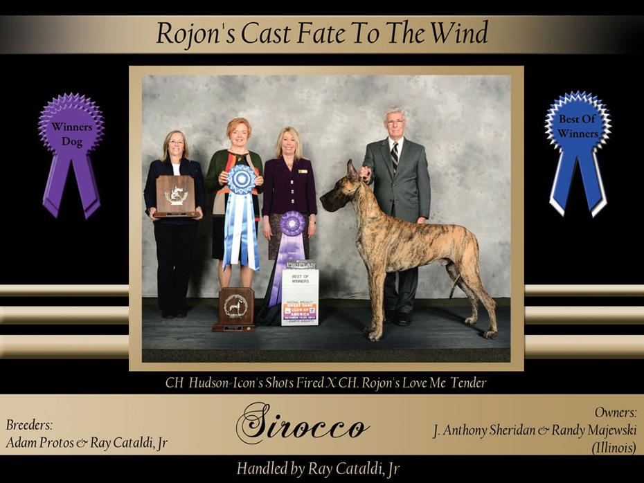 Winners-Dog-BOW-Rojon's-Cast-Fate-to-the-wind