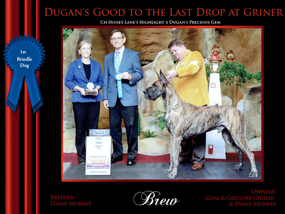 1st_Brindle_Dog_Brew