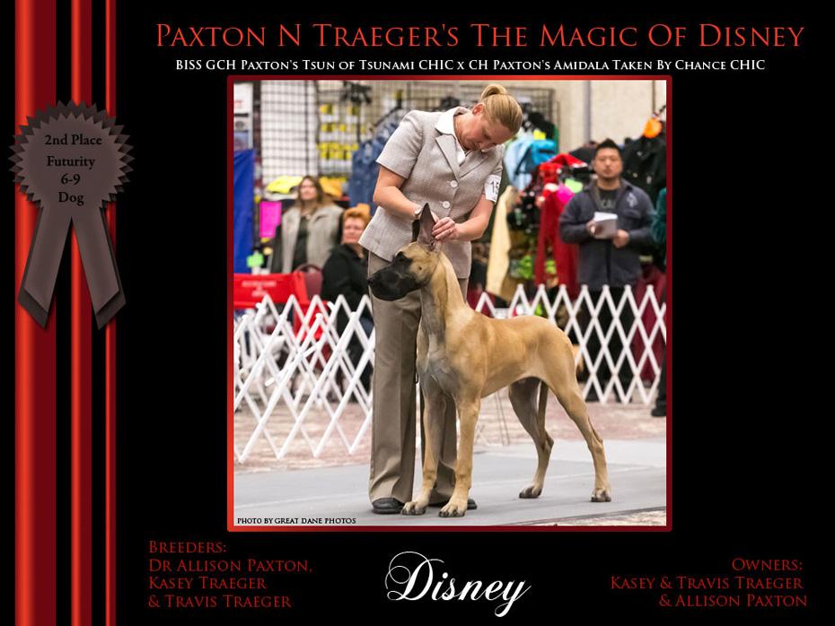 2nd_Futurity_6-9_Dog_Disney